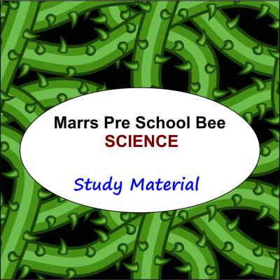 marrs pre school bee science